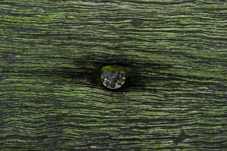 surmounted: nail in wood with fake moss