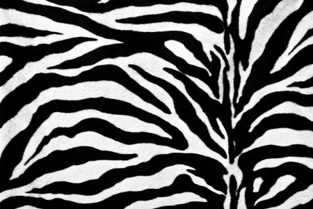 zebra crossing: Zebra fur texture background Stock Photo
