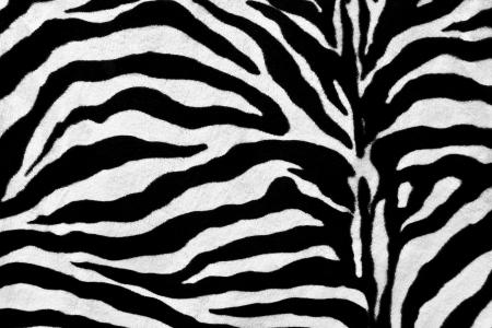 furry stuff: Zebra fur texture background Stock Photo