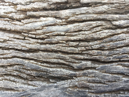 Background of tree bark texture