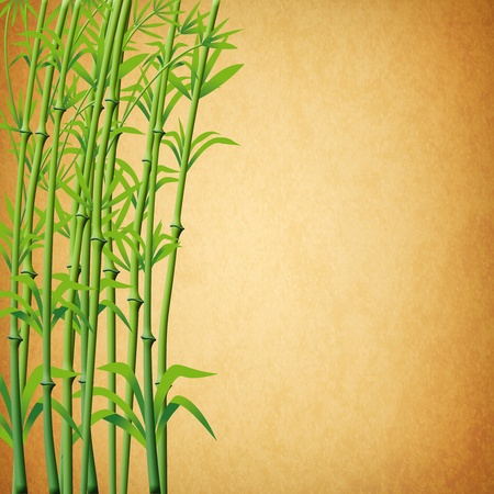 ornamental horticulture: illustration of bamboo branches