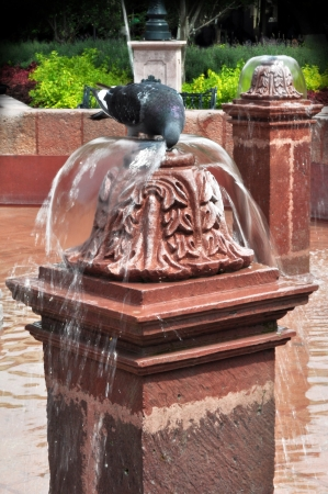 Pigeon drinking water from a fountain Queretaro Mexico photo