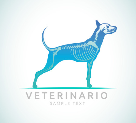 Veterinario - Veterinarian spanish text - Veterinary care - dog care Vector
