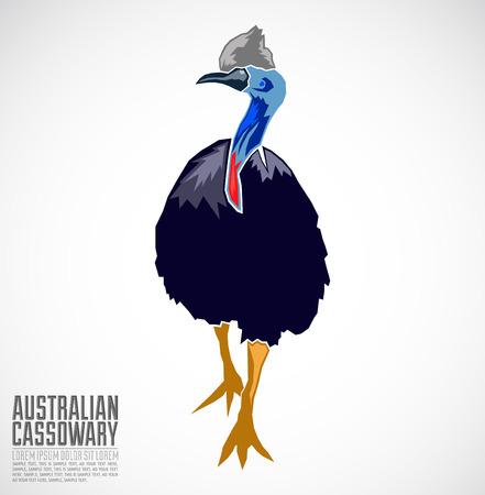 emu bird: Australian Cassowary Vector illustration