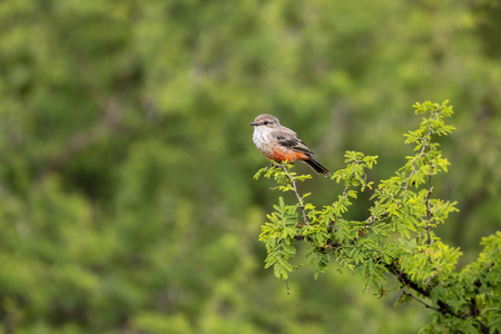 Robin bird on a tree branch and beautiful green natural bokeh background Stock Photo