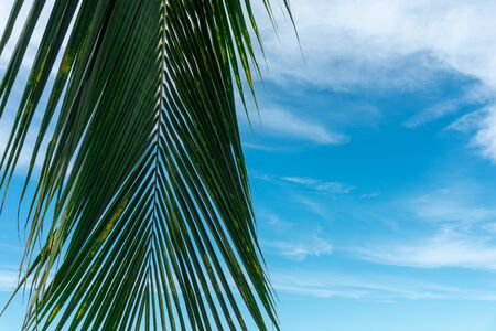 Palm Leaf and Beautiful blue sky with clouds. Stockfoto