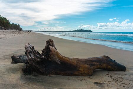 Tree Trunk on Sand in Mexican Beach.