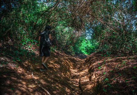 Brunette Man Exploring in Dense Jungle Rainforest. Stockfoto