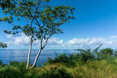 Panoramic View with a Tree and the Ocean in the background, Sayulita Mexico.