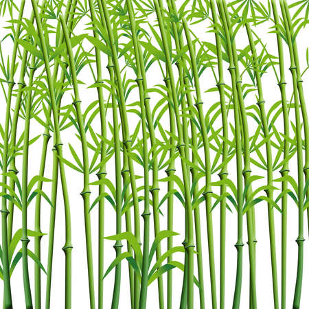 Bamboo Branches Background Ready for design.