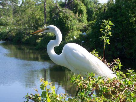 White Bird Imagens