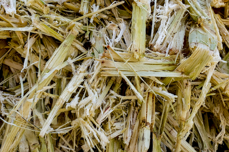 Sugarcane Bagasse. Close up of bagasse is the fibrous material left over from the sugarcane extraction process of sugar factory industrial. - background texture. selective focus.