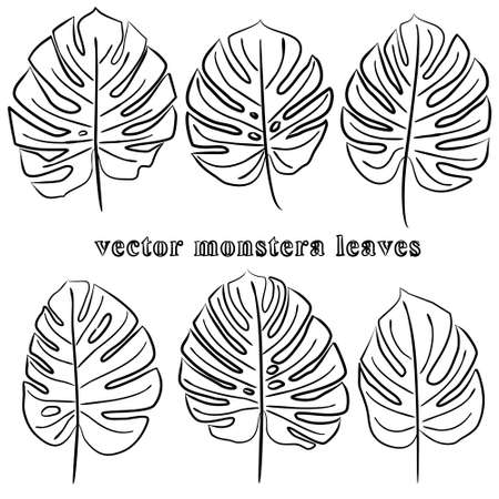 Set of hand-drawn monstera leaves. Natural jungle theme. Isolated on white background image of tropical leaves. Vector illustration.