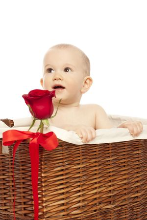 Little boy in basket with red  rose photo