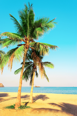 Palm trees on the shore of the Indian Ocean. Emirate of Fujairah, UAE. Bright toned photo. Stock Photo