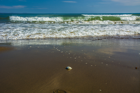 frothy: beautiful beach, on the sand roll frothy waves. fluffy waves on the shore
