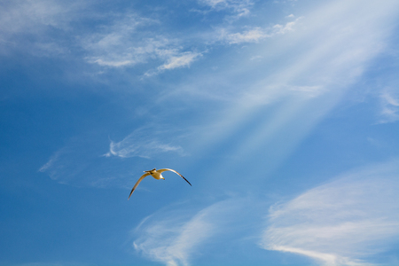 wingspan: high blue sky flying white seagulls hovering over the sea. on a sunny day