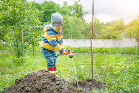 the little boy in the garden, watering the tree planted by strands of sapling from a hose, on a sunny day Stock Photo - 81477617