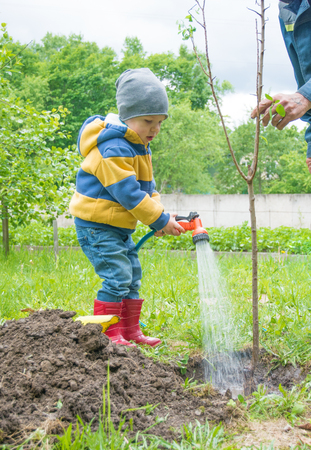 planted: the little boy in the garden, watering the tree planted by strands of sapling from a hose, on a sunny day