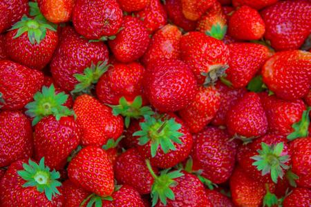 many large, bright, juicy, beautiful strawberries. ripe berries