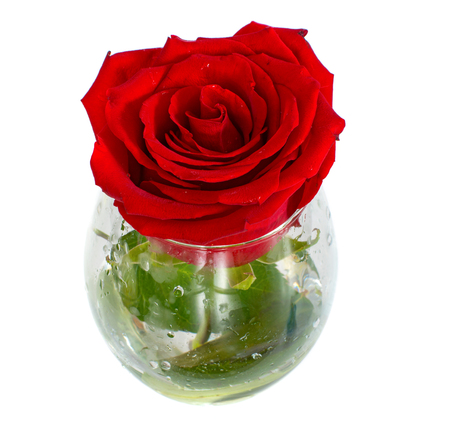 one rose in a glass on a white background, isolate