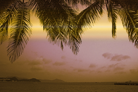 Palm trees in the tropics, on a background of dark sky. big beautiful palm trees against the sky. Asia