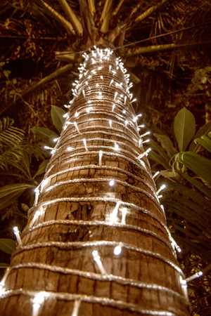 palm tree decorated with garland christmas tree lots of lights in the night tropics