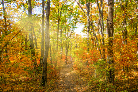 autumn forest, all the foliage is painted with golden color in the middle of the forest road. sunny day
