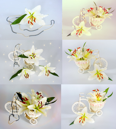 a lot of beautiful lilies without background, flowers lilies isolated in large numbers. sets flowers