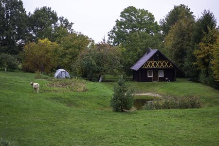 Wooden house in nature in the field. Country house with cow grazing in front and pond.  Reklamní fotografie