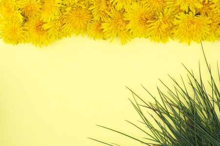 Spring or summer mood. Yellow dandelions lie in a row from the top, green grass in the corner on a yellow background. Frame. Place for text.