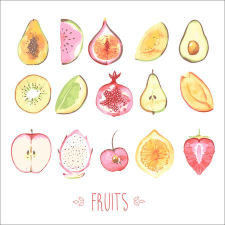 fig fruit: Fruits Illustration