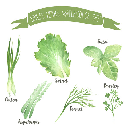 Green herbal watercolor vector spices set