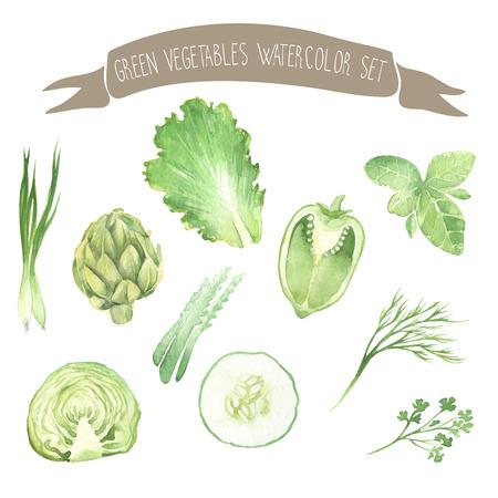 vegetables on white: Green fresh vegetables watercolor vector set