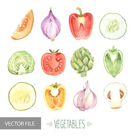 Aquarel groenten biologisch vector set Stock Illustratie