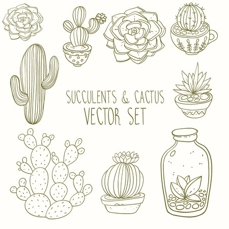 Succulents and cactus vector handpainted set