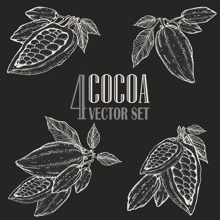 Hand geschilderde cacao plantkunde afbeelding instellen. Decoratieve doodles van gezonde voedingsstoffen voedsel.