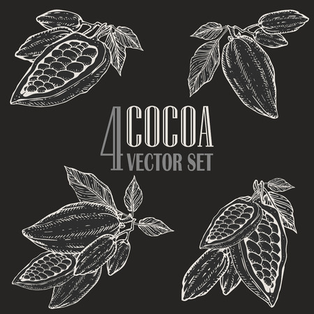 Handgemalte Kakao Botanik Illustration festgelegt. Dekorative Kritzeleien gesunder Nährstoff Nahrung.