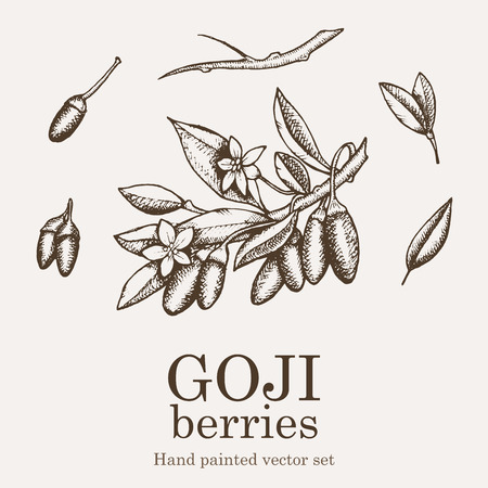 Goji berry superfood set. Health nutrient food vector hand drawing illustration