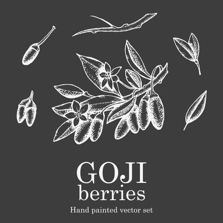 nutrient: Goji berry superfood set. Health nutrient food vector hand drawing illustration on chalkboard