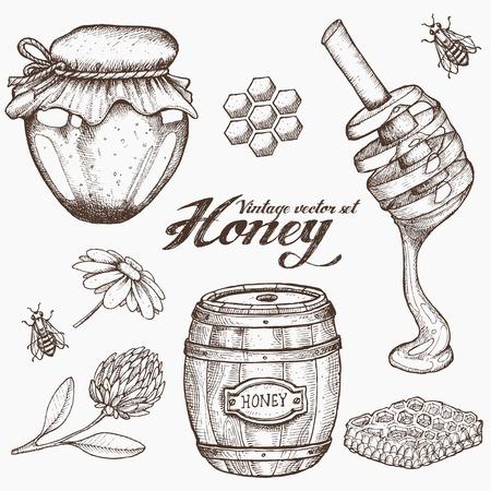 miel de abeja: tarro de miel, barril, cuchara, abeja, panal, la manzanilla, el trébol, vector conjunto de la vendimia. Grabado a mano alimentos orgánicos ejemplo dibujado croquis.