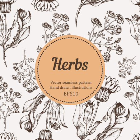 herb medicine: Medicine herb vector seamless nature pattern. Hand drawing sketch illustration