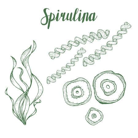 Spirulina superfood organic healthy dietary supplement. Hand drawn sketch vector illustration isolated on white background