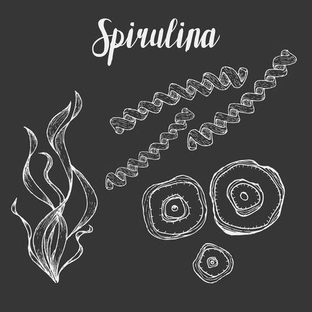 supplement: Spirulina superfood organic healthy dietary supplement. Hand drawn sketch vector illustration isolated on chalkboard background