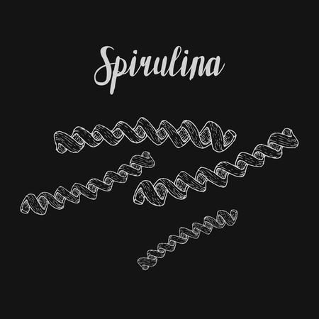 dietary: Spirulina superfood organic healthy dietary supplement. Hand drawn sketch vector illustration isolated on chalkboard background
