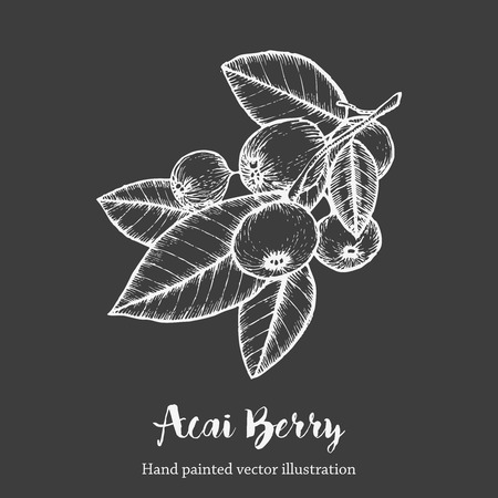acai berry: Acai berry. Organic super food ingredient. Vector hand drawing sketch illustration on chalkboard