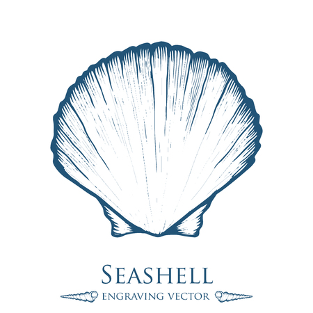 sea shell: sea shell, nature ocean aquatic underwater . marine engraving illustration on white background