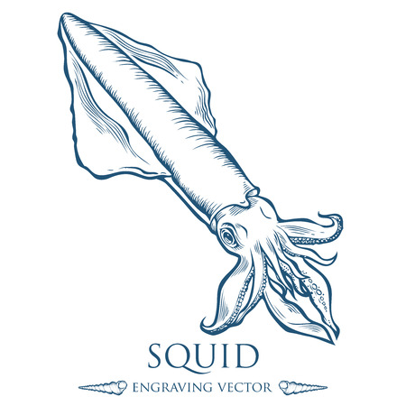 sand drawing: Squid seafood nature ocean aquatic underwater .  marine engraving illustration on white background Illustration
