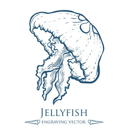 food poison: Jellyfish nature ocean aquatic underwater . marine engraving illustration on white background