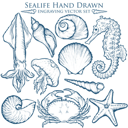 sea shell, starfish nature ocean aquatic underwater set.  marine engraving illustration on white background Vettoriali